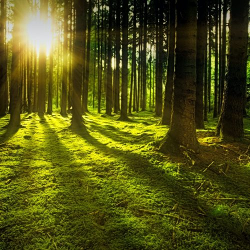 forest bathing forest therapy